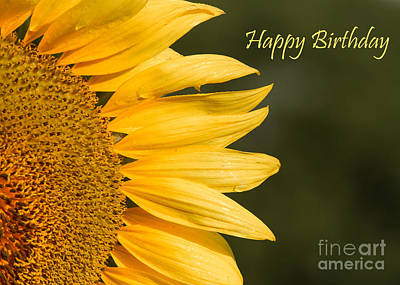 Photograph - Birthday Sunflower by Dale Nelson