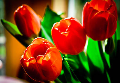 Photograph - Birthday Tulips by Ronda Broatch