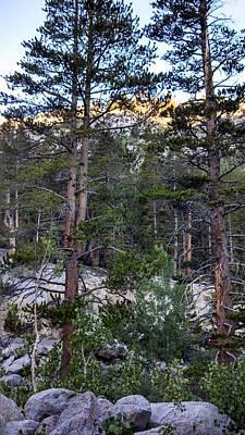 Bishop Creek - Pine Trees Art Print