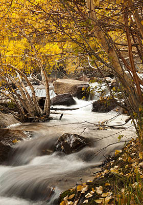 Photograph - Bishop Creek Fall Colors by Joe Doherty