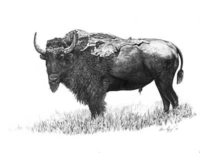Bison Drawing - Bison by Aaron Spong