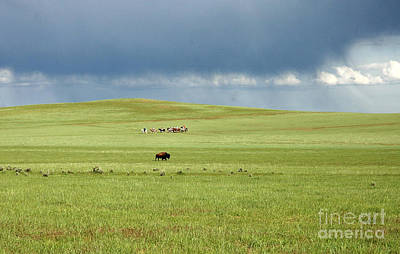 1009a Bison And Riders Art Print