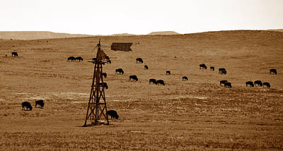 Bison Photograph - Bison And Windmill by David Lee Thompson