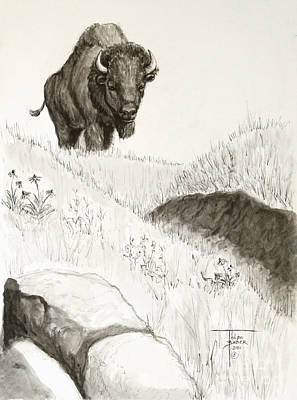 Bison Approach Art Print