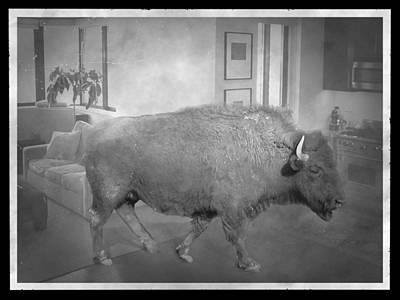 Composite Digital Art - Bison At Home by Flo Karp