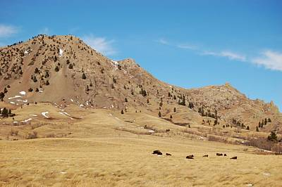 Photograph - Bison At Mato Paha-bear Butte by Dakota Light Photography By Dakota