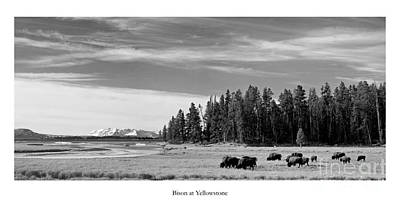 Yellowstone National Park Photograph - Bison At Yellowstone In Black And White by Twenty Two North Photography