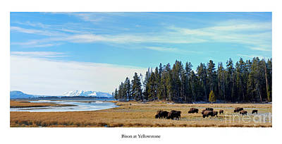 Yellowstone Wall Art - Photograph - Bison At Yellowstone by Twenty Two North Photography