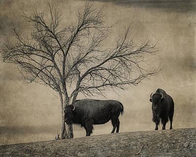 Bison Beauties Art Print