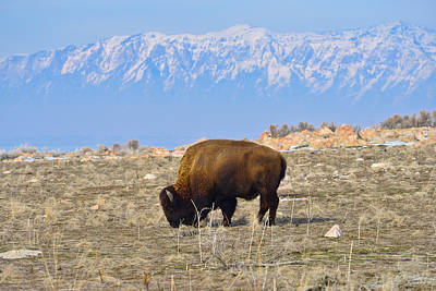 Landscapes Photograph - Bison Beneath The Range by Greg Norrell