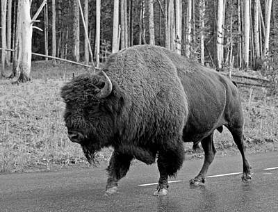Photograph - Bison Crossing by Johnny Adolphson