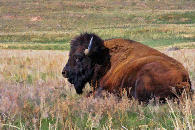 Photograph - Bison  by Ely Arsha