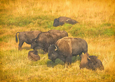 Photograph - Bison Family by Greg Norrell