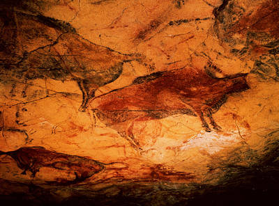 Prehistoric Photograph - Bison From The Caves At Altimira, C.15000 Bc Cave Painting by Prehistoric
