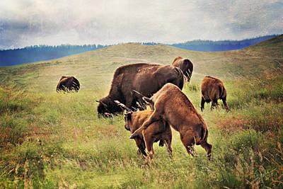 Photograph - Bison Games by Deborah Johnson