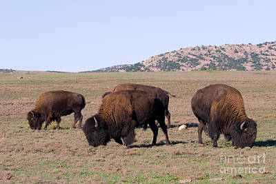 Bison Art Print by Gregory G. Dimijian, M.D.