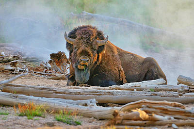 Bison In The Mist Art Print by Greg Norrell