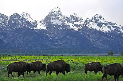 Bison Digital Art - Bison  by Jeff Conrad