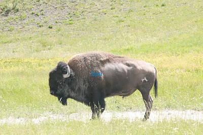 Bison Digital Art - Bison by Lester Schwabe