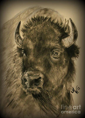 Drawing - Bison  by Michelle Wolff