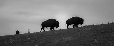 Photograph - Bison On The Ridge by Heidi Hermes
