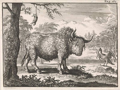 Pelican Drawing - Bison, Opposum And A Pelican In An Exotic Landscape by Caspar Luyken And Willem Broedelet