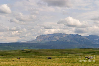 Photograph - Bison Paddock by Charles Kozierok