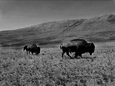 Bison Digital Art - Bison by Patricia Erwin