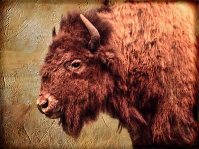 Photograph - Bison Portrait   by Betty  Pauwels