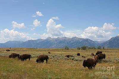Bison Roaming The West Art Print by Tammy Venable