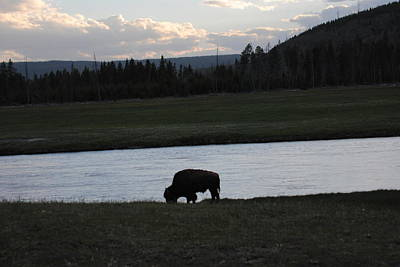 Photograph - Bison Silhouette by Robert  Moss