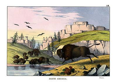 Bison Drawing - Bison by Splendid Art Prints