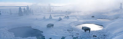 Thawing Photograph - Bison West Thumb Geyser Basin by Panoramic Images