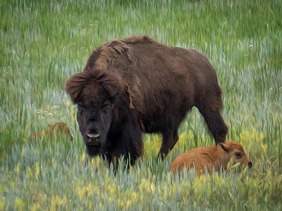 Photograph - Bison With Calves by Patti Deters