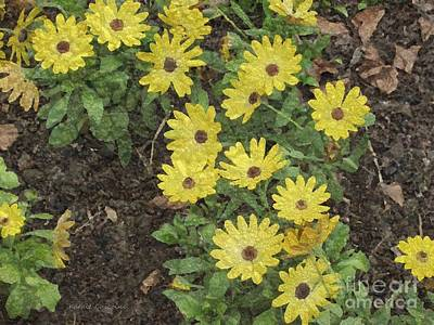 Photograph - Bits Of Sunshine by Kathie Chicoine