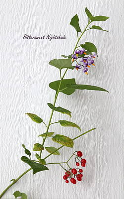 Bittersweet Photograph - Bittersweet Nightshade by Angie Vogel