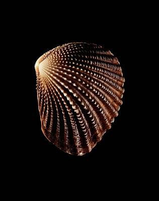 Bivalve Mollusc Shell Art Print by Gilles Mermet