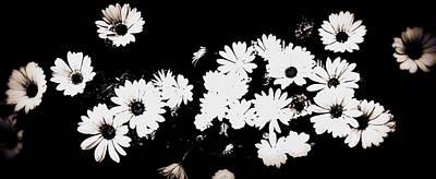 Digital Art - Black An White Daisies by Kathy Sampson