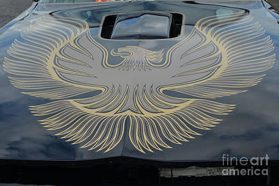 Photograph - Black And Gold Firebird by Mark Spearman