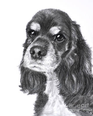 Drawing - Black And Tan Cocker Spaniel by Kate Sumners