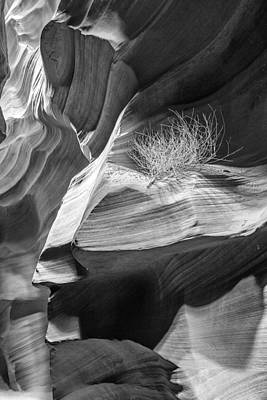 Black And White Antelope Canyon Tumbleweed  Print by Susan Schmitz