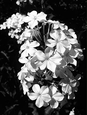 Art Print featuring the photograph Black And White Beauty by Alohi Fujimoto