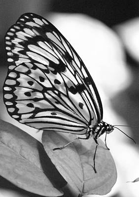 Photograph - Black And White Beauty by Amee Cave