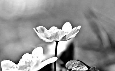 Black And White Beauty Art Print