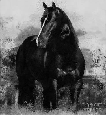 Painting - Black And White Beauty by Scott B Bennett