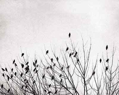 Photograph - Black And White Birds by Carolyn Cochrane