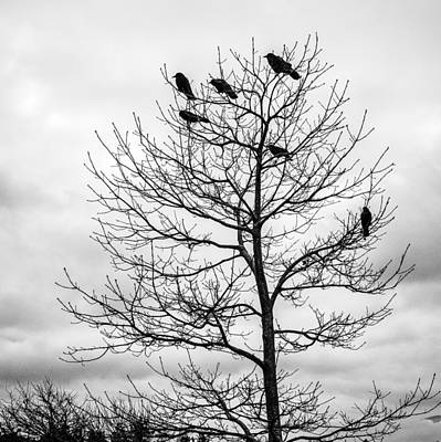 Photograph - Black And White Blackbirds  by Roxy Hurtubise