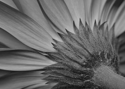 Photograph - Black And White Blossom by Frozen in Time Fine Art Photography