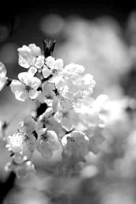 Black And White Blossoms Art Print