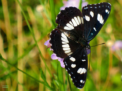 Photograph - Black And White Butterfly by Alexandros Daskalakis